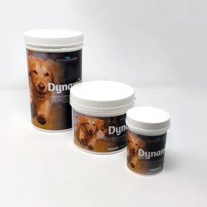 infiammazione articolare nel cane